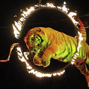 Цирки Лихославля