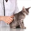 Ветеринарные клиники в Лихославле